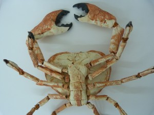 Crab belly sculpture