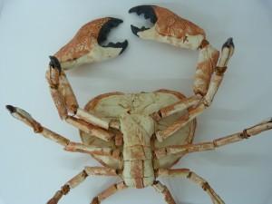 Crab belly sculpture